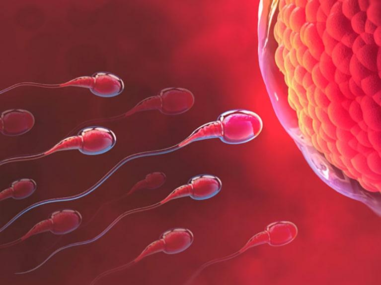 Fertilization-v1-opt